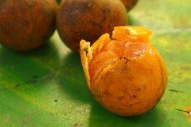 ส้มบางมด